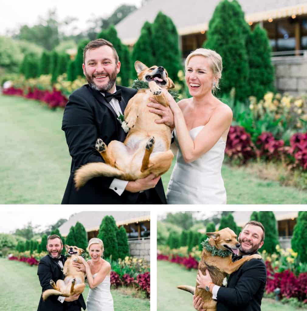 Forest Park Golf Course Bride and Groom Portraits with Dogs, Dog of Honor, St. Louis MO, Wedding Dogs